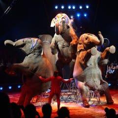 Für viele Besucher der Höhepunkt einer Vorführung: die Elefantennummer des Circus Knie. (Bild: Keystone)