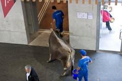 Für die Tiere gibt es selbstverständlich einen speziellen Eingang. (Bild: Michel Canonica)