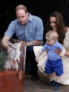 Mama Kate und Papa William zeigen ihrem Sohn ein Bilby, welches nach dem kleinen Prinzen getauft wurde. (Bild: Keystone)