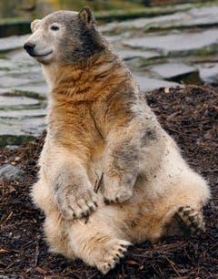 Knut an seinem 1. Geburtstag. (Bild: Keystone)