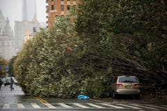 Ein riesiger entwurzelter Baum blockiert in Manhattan eine Strasse. (Bild: Keystone)