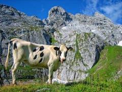 Die Alpenmiss... (Bild: Toni Sieber)