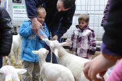 Ein Bub füttert ein Lamm per Schoppen. (Bild: Hanspeter Schiess)