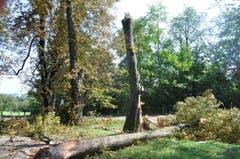 In der Kastanien-Allee beim Tägerwiler Schloss Castell knickten zwei Baumkronen ab. (Bild: Viola Stäheli)