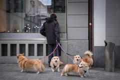 Ostsicht: Im Osten unterwegs. Ein Hundehalter mit vier Hunden in der Altstadt St. Gallen (Bild: Urs Bucher)