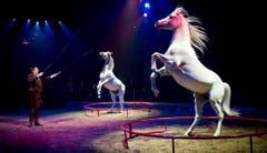 Fredy Knie mit seiner Pferdenummer. (Bild: Keystone)