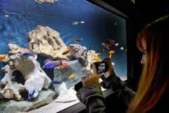 An der Animalia konnten auch Fische beobachtet werden. (Bild: Ralph Ribi)
