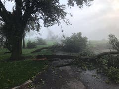 15 Bäume von Stefan Burkhalter sind dem Sturm zum Opfer gefallen. (Bild: PD)