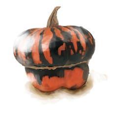 Man könnte ihn essen, aber als Deko ist Aladdin besser geeignet. Seine Haut ist so hart, dass man ihn fast mit einer Axt spalten müsste. Das auffällige Aussehen und die Färbung haben dem Charakterkopf Trivialnamen wie Türkenturban und Bischofsmütze eingetragen. (Bild: Sandra Näf)