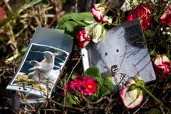 Später wurde bekannt, dass Knut an einer Gehirnentzündung gelitten hatte. (Bild: Keystone)