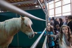 St. Gallen - OFFA Frühlingsmesse Freitzeit- und Sportmesse und Pferdemesse Besucher in der Pferdeausstellung (Bild: Ralph Ribi)