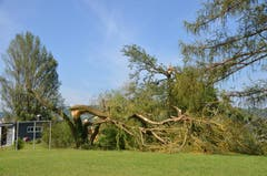 Etliche Parkbäume in Mammern fielen den Sturm zum Opfer. (Bild: Margrith Pfister-Kübler)