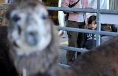 Eine junge Besucherin beobachtet ganz genau. (Bild: Reto Martin)