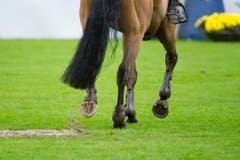 Ein Pferd auf schwerem Terrain beim Nationenpreis. (Bild: Urs Bucher)