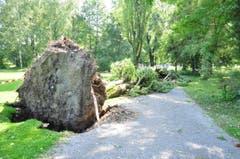 Im Kreuzlinger Seeburgpark stürzte eine grosser Baum um. Die Feuerwehr hat das Gelände gesichert. (Bild: Viola Stäheli)