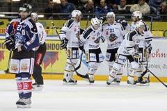 Lugano-Spieler jubeln nach dem 0-1, während Zugs Josh Holden, links, sich die Hose hoch zieht. (Bild: Keystone)