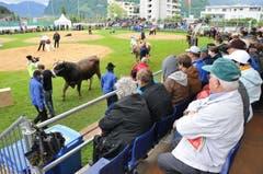 Präsentation der Lebendpreise, angeführt von Muni Benno. (Bild: Robert Hess / Neue OZ)