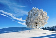 Sommerlinde im Winter (Bild: H.-J. Nüesch)