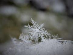 Schneeflocken. (Bild: Ruth Kessler)