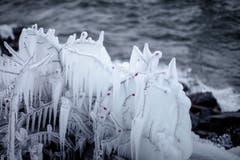 Am Bodensee wird Wind und Wetter entgegengehalten, hier in Horn. (Bild: Remo Schläpfer)