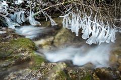 Spezielle Eisskulpturen am Altbach. (Bild: Marc Bollhalder)