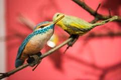 Vögel sind unter Sammlern von Weihnachtsschmuck begehrt. Manche sammeln nur Vögelchen. Dieser Eisvogel aus Watte ist ein besonders kostbares Stück. (Bild: Sabrina Stübi)