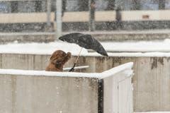 Wetterbilder, Schnee rund um den Hauptbahnhof St. Gallen. (Bild: Hanspeter Schiess)