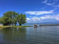 Zeit fürs erste Bad im Bodensee (Bild: Toni Sieber)