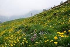 Frühling auf der Hüttenalp auf Höhe Seealpsee. (Bild: Franz Häusler)