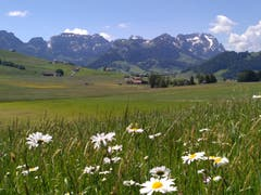 Eine Sommerwiese in Eggerstanden (Bild: Margrit Zürcher)