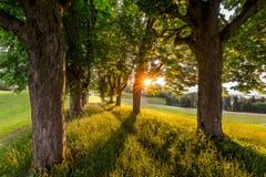 Was für ein fantastischer Abend im warmen Licht der Sonne. (Bild: Marc Bollhalder)