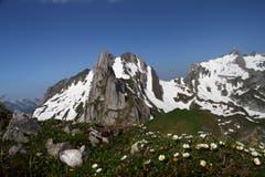 Gegensätze im Alpstein: Blühende Alpenblumen und die Schneereste des Winters. (Bild: Heinz Weber)