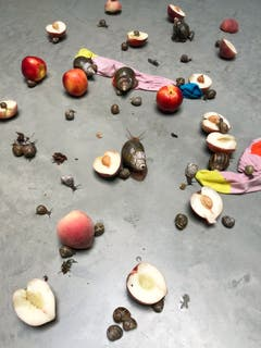 Fotomuseum Winterthur - Jürgen Teller Leg, Snails and Peaches series, Latimer Road Studio, London