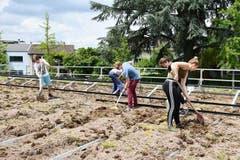 Schüler und Schülerinnen der Kanti Musegg bei der Arbeit auf dem Dach der Turnhalle Bramberg (Bild: Alinda Streuli)
