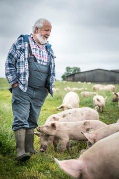 Willi Knupp kümmert sich auf dem Landwirtschaftsbetrieb des Massnahmezentrums Kalchrain um die Schweine.