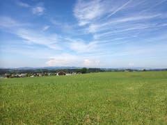 Auf dem Stück zwischen Andwil und Ronwil ist vor allem Wiesland zu sehen. (Bild: Marlen Hämmerli)