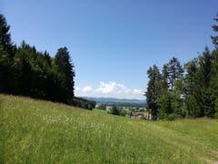 Nach Ronwil folgt ein letztes Stück Wald, bevor es am Golfplatz Waldkirch entlang nach Hauptwil geht. (Bild: Marlen Hämmerli)