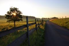 Spaziergang um den Bommer Weiher bei Sonnenaufgang in Schwaderloh. (Bild: Laura Bley)
