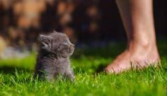 Oi, wer kommt den da? Junge Katze auf dem ersten Ausflug (Bild: Emanuel Niederhauser)