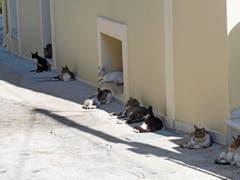 Diese Gasse in Assos (Kefalonia) ist Heimat zahlreicher Katzen.