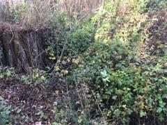 Vorher: Der Tobelbach in Landschlacht wurde etwas vernachlässigt. (Bild: PD)