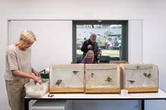 Durch ein Fenster können Besucherinnen und Besucher des Naturmuseums St.Gallen etwa bei der Vogelfütterung durch Dora Müller in der Wildvogelpflegestation zuschauen. (Bild: Michel Canonica - 10. Mai 2017)