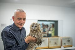 Christian Müller mit einem Kauz in den neuen Räumen der Vogelpflegestation im Naturmuseum (Bild: Michel Canonica - 10. Mai 2017)