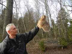 Geschafft: Christian Müller entlässt einen Waldkauz in die Freiheit (Bild: Voliere-Gesellschaft St.Gallen - 22. März 2013)