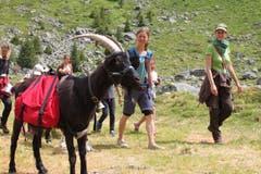 Unterwegs mit den Ziegen in der Göscheneralp. (Bild: Markus Zwyssig, 7. Juli 2018)