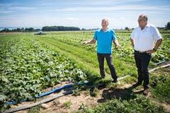 Ferdinand Vogel (links) und Dominique Mettraux, Verkaufsdirektor von Reitzel, auf dem Essiggurkenfeld in Kesswil. (Bilder: Reto Martin)