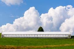 Treibhaus vor Kumuluswolken in Degersheim. (Bild: Victor Schönenberger)