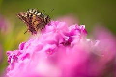 Auf einer rosa Wolke sitzend. (Bild: Priska Ziswiler-Heller)