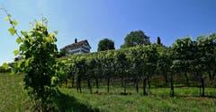 Schloss Dottenwil im Rebenland. (Bild: Walter Schmidt)