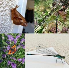 Insektenwelt in Neudorf und Oberkirch. (Bild: Elias und Fabienne Takayama)